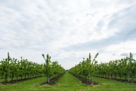 本州最北端のワイナリー・下北ワインコース(むつ市)