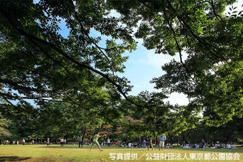 渋谷の緑地帯・代々木公園コース(渋谷区)