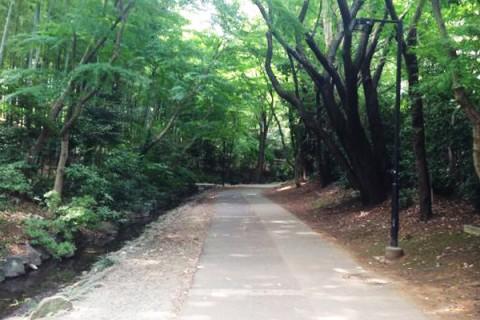 雑木林と公園をつないで走る都筑緑道コース(横浜市)