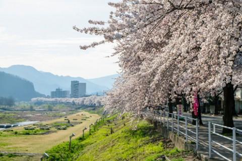春は桜、秋は芋煮会!馬見ヶ崎川河川敷コース(山形市)