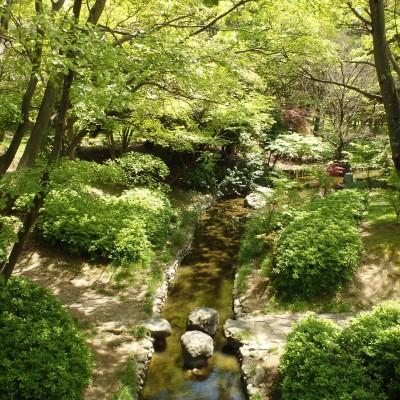 木漏れ日の道を走る、大泉緑地コース(堺市)