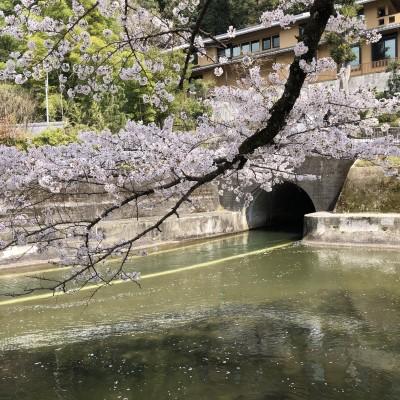大津~琵琶湖疎水~祇園四条:ロード&プチトレイル&河川敷