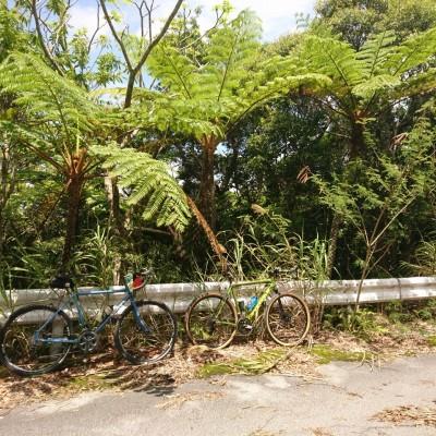 ヤンバルライド|大国林道を楽しもう