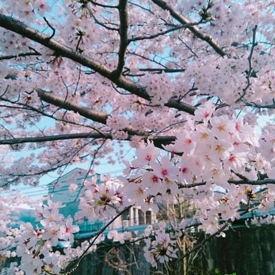 """【札幌開催】~春がきた!~ 札幌の春を満喫ロゲイニング """"走ろうにっぽん"""""""