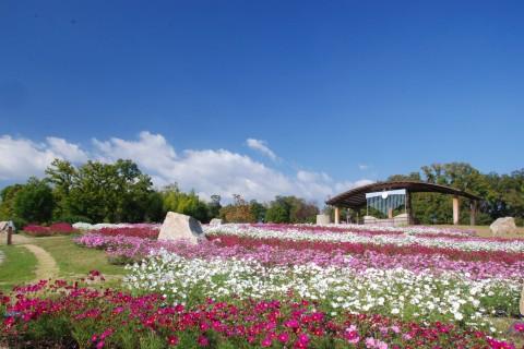 古墳群と四季折々の花が美しい馬見丘陵公園コース(河合町)