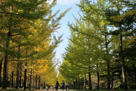 四季の彩り満喫ラン、山形県総合運動公園コース(天童市)