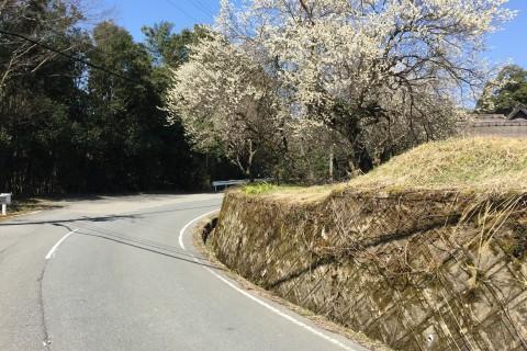 嵐山musubi~越畑(池手前)起伏ロング走コース(片道)