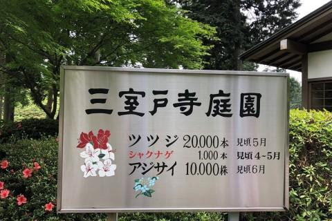 三室戸寺あじさい鑑賞&京都最強ベーカリー買い食いマラニック