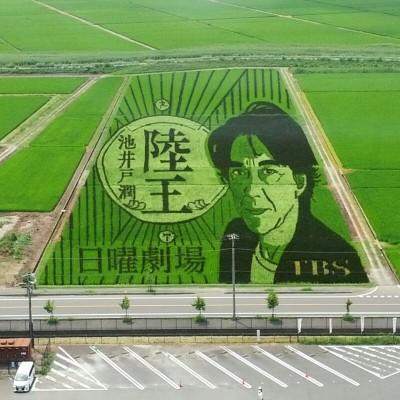 [JoyRun☆ 996th ] 古代蓮と田んぼアート観賞マラニック