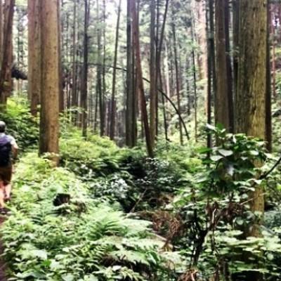 紅葉シーズンの秋へ!栃木県益子町の初心者コース♪トレイルランニングin雨巻山