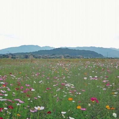 ≪ランde観光≫[奈良]大和三山と建国の地をめぐる(コスモス)【初・中級】 観光・トレラン