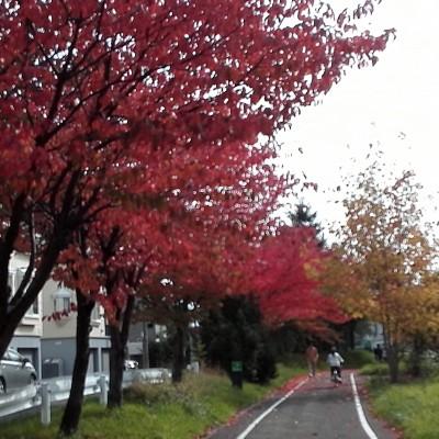 自転車道も 紅葉さかり