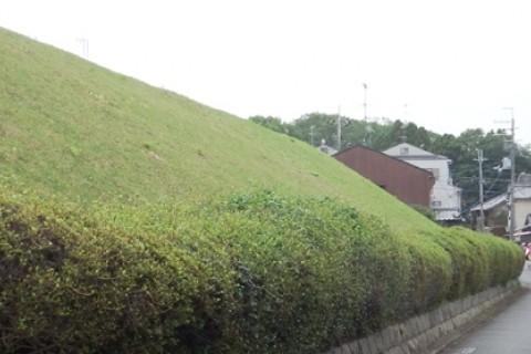 ☆京都の街をぐるっと一周☆「京都の城壁 御土居(おどい)めぐりマラニック」約28km