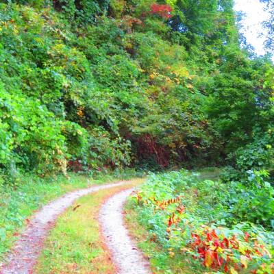 林道で峠越え