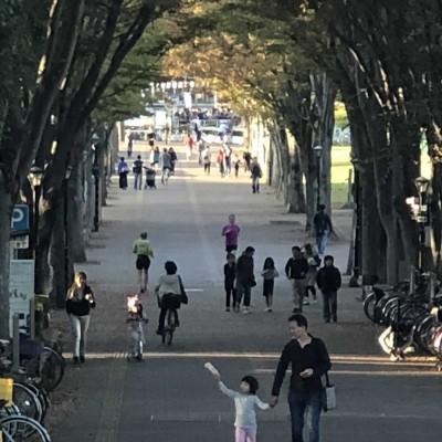 自転車と歩行者しか通ることのできない、つくば公園通り