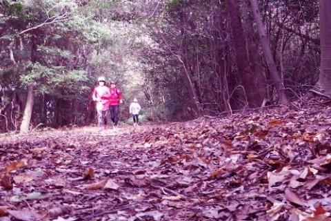 「京都 南禅寺から醍醐寺へ紅葉トレイルマラニック2018」約25km