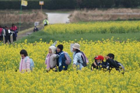 薩摩半島最南端、「いぶすき」をさぁ歩こう!第28回 いぶすき菜の花マーチ