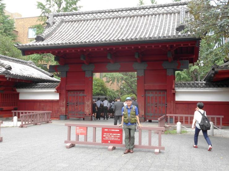 赤門から東京大学の銀杏並木に入ります。