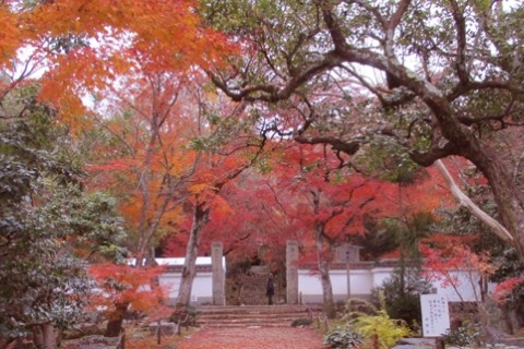 「京都まちなか紅葉ミステリー2018」観光マラニック《集団走》約18km