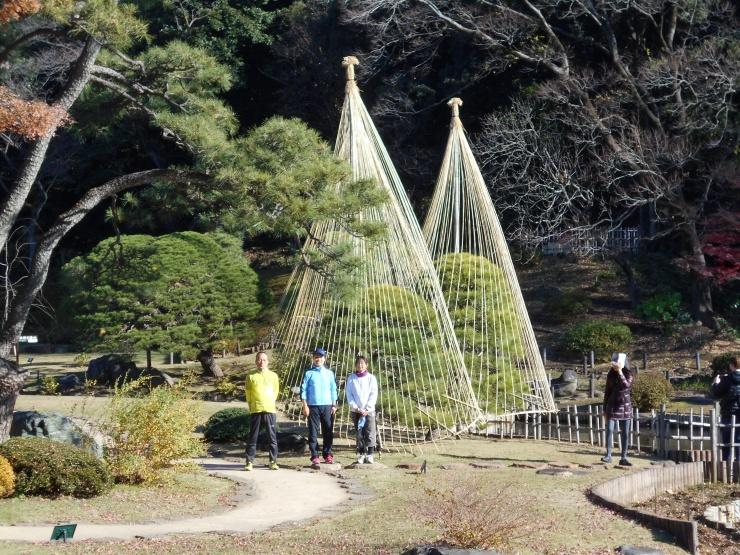 早稲田、神田川沿いの肥後細川庭園です。雪吊りが並びます。