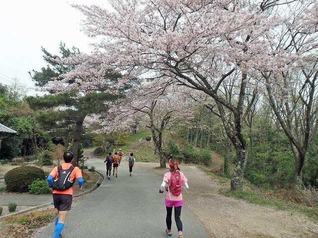≪ランde観光≫桜シリーズ(1)[滋賀]桜舞う!戦国の山城から北国脇往還へ【レベル4】