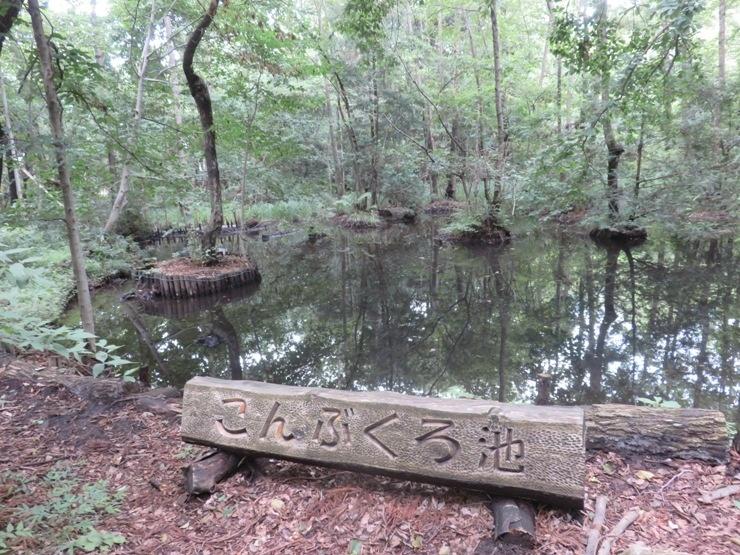 運河から柏の葉公園      12km