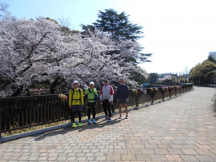哲学堂公園、妙正寺川沿いの桜並木です。