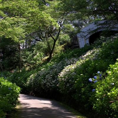 生駒 アジサイ園地