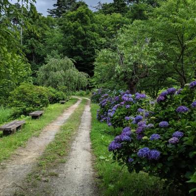 走りやすい林道