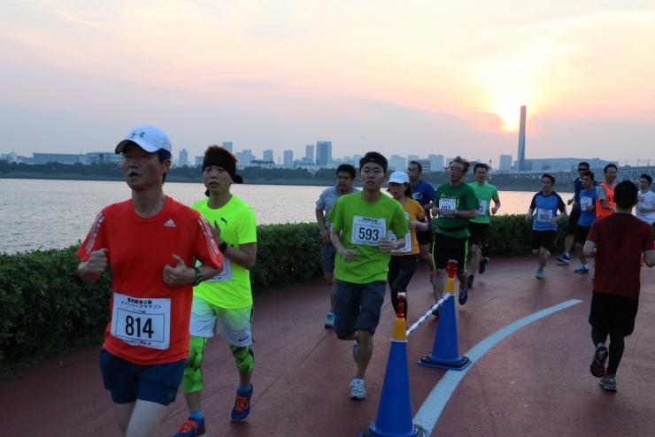 【スタッフ募集】2020葛西臨海公園ナイトハーフマラソン(4月・6月・7月・9月)