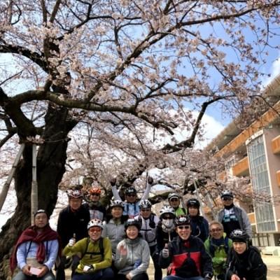 樹齢100年の天然記念物の桜
