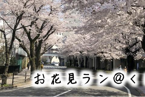 【開催中止】お花見ラン@くにたち