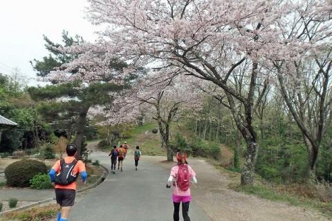 ≪ランde観光≫桜シリーズ(1)[滋賀]桜舞う!戦国の山城から北国脇往還へ【レベル3】