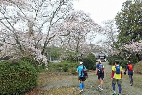 ≪ランde観光≫桜シリーズ(2)[奈良]建国の地より吉野へ!桜詣ラン【レベル4】 観光ラン