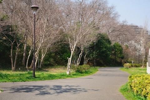 新京成線一駅の旅 「北習志野駅~高根木戸駅」 7km 団体歩行 (中止になりました)