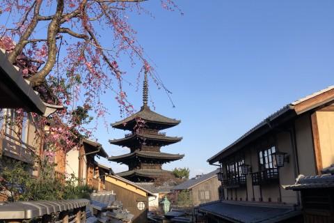 京都桜マラニック