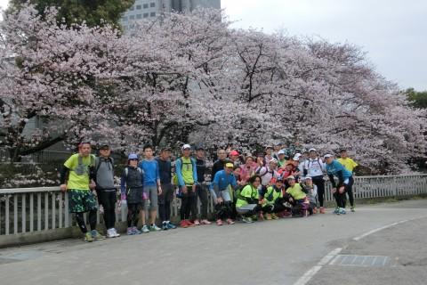 3/22(日) 東京お花見マラニック10km・ハーフ