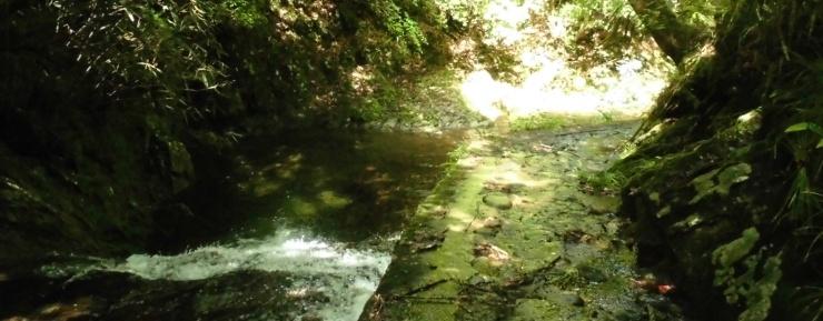 室生古道 クマタワ峠越え ミッドサマー ショートトレイル 約17km (名張の湯 入浴券付き)