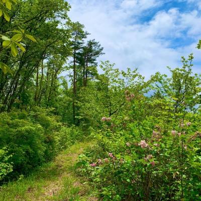 Kahoku  Trail  ...
