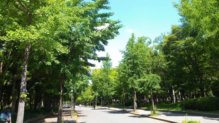 立ち上げボランティア募集!「大阪城公園parkrun」