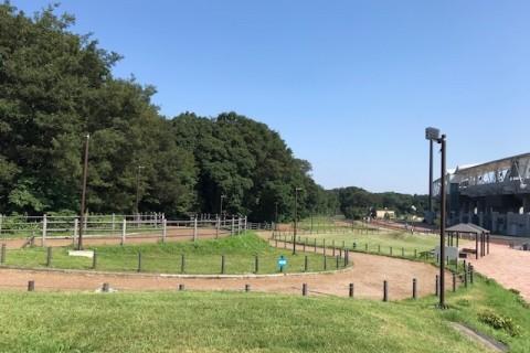 【RunField】相模原クロカン練習会(2021年1月開催)