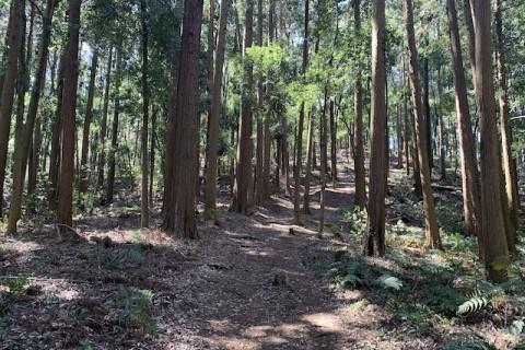 森をのんびり見に行くマラニック(横浜市 長津田駅集合)約10km