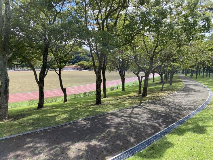コースは気持ちよい緑がいっぱいです。