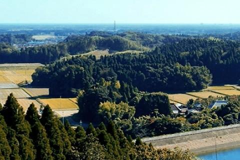 昭和の森 FOREST RUN