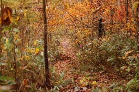 【RunField】【Trail Running】紫波あづまねトレイルツーリング(午前の部)