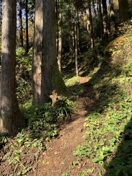動山の登りはとても気持ちのいいトレイルです!