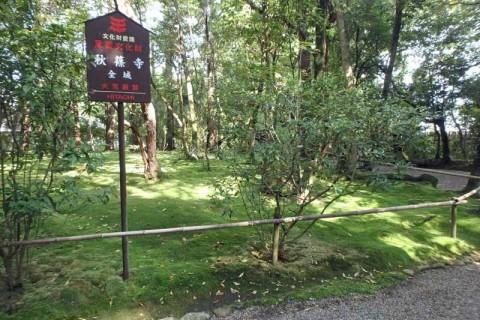 ≪ランde観光≫[奈良]歴史の道で奈良一周!(塔めぐりバージョン)【レベル5】 観光ラン