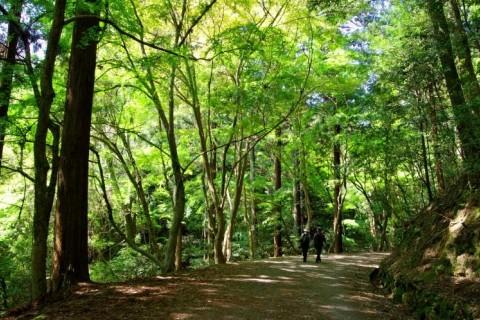 JLSA健康ウォーキング「滝坂の道・春日山原始林コース」