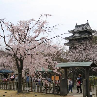 桜と歴史大満喫!ガイドと巡る城下町ウォーキング