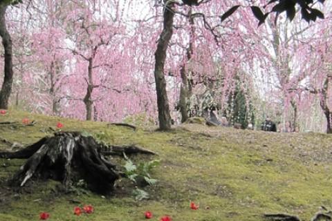 やんちゃ村のラン&ウォーク「早春の京都 梅めぐりフォトラリー」
